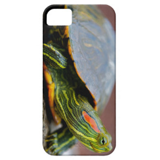 Red-eared Slider Side View iPhone 5 Cases