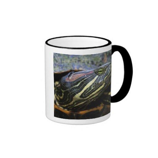 Red-eared Slider, Trachemys scripta elegans, 2 Ringer Mug