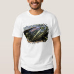 Red-eared Slider, Trachemys scripta elegans, 2 Tee Shirt