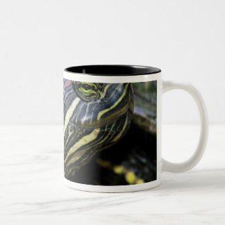 Red-eared Slider, Trachemys scripta elegans, 2 Two-Tone Coffee Mug