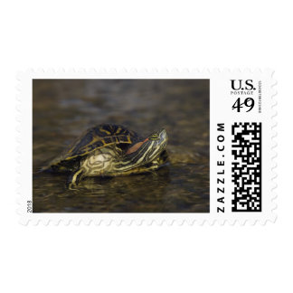 Red-eared Slider, Trachemys scripta elegans, Postage Stamp