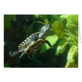 Red-Eared Slider Turtle Card