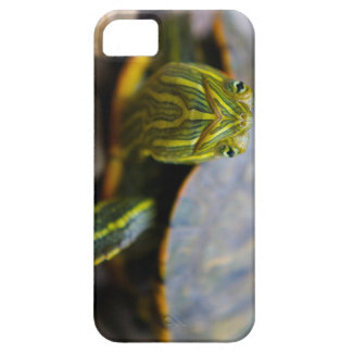 Red-eared Slider Turtle Head-on View iPhone 5 Case