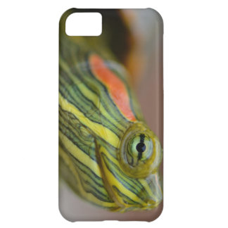 Red-eared Slider Turtle iPhone case Cover For iPhone 5C