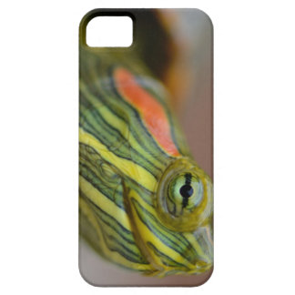 Red-eared Slider Turtle iPhone case iPhone 5 Cases
