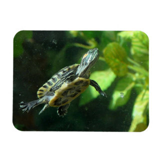 Red-Eared Slider Turtle Magnet