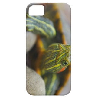 Red Eared Slider Turtle on River Rocks iPhone 5 Case