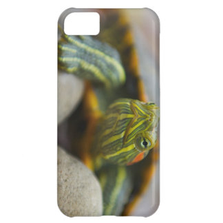 Red Eared Slider Turtle on River Rocks iPhone 5C Cases