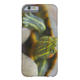 Red Eared Slider Turtle on River Rocks Barely There iPhone 6 Case