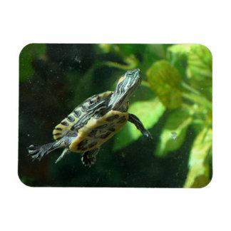 Red-Eared Slider Turtle Rectangular Photo Magnet