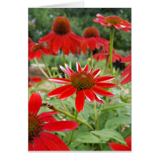 Red Echinacea Notecards (Blank Inside) Card
