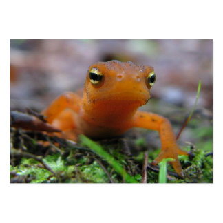 Red Eft ATC Business Card
