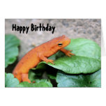 Red Eft Salamander Nature Birthday Card