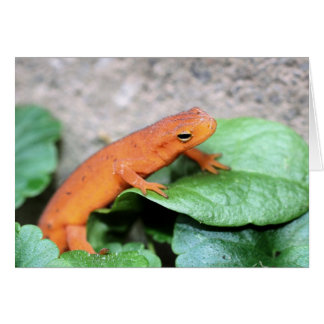 Red Eft Salamander Nature Photography Card