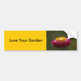 Red Everlasting Flower Bumper Sticker