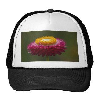 Red Everlasting Flower Trucker Hat