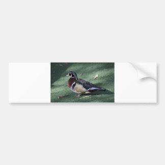 Red eye duck bumper sticker