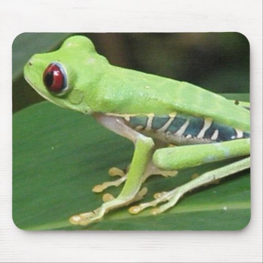 Red Eye Green Tree Frog Mouse Pad
