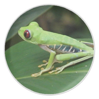 Red Eye Green Tree Frog Plate