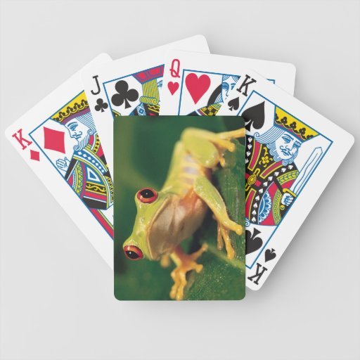 Red eye tree frog bicycle playing cards