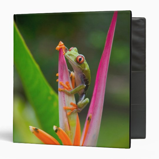 Red-eye tree frog, Costa Rica 2 3 Ring Binder