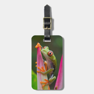 Red-eye tree frog, Costa Rica 2 Bag Tag