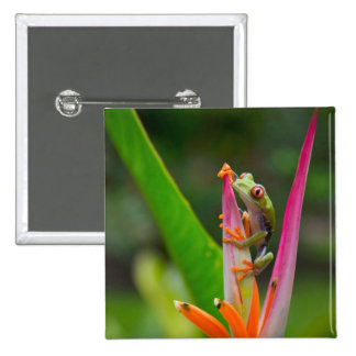Red-eye tree frog, Costa Rica 2 2 Inch Square Button