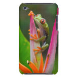 Red-eye tree frog, Costa Rica 2 Barely There iPod Case