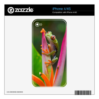 Red-eye tree frog, Costa Rica 2 Decal For The iPhone 4S