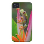 Red-eye tree frog, Costa Rica 2 iPhone 4 Cover