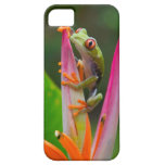 Red-eye tree frog, Costa Rica 2 iPhone 5 Case