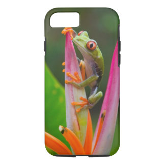 Red-eye tree frog, Costa Rica 2 iPhone 7 Case