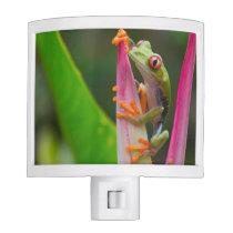 Red-eye tree frog, Costa Rica 2 Night Light