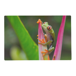 Red-eye tree frog, Costa Rica 2 Placemat