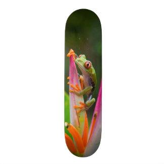 Red-eye tree frog, Costa Rica 2 Skate Boards