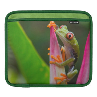 Red-eye tree frog, Costa Rica 2 Sleeve For iPads