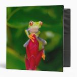 Red-eye tree frog, Costa Rica 3 Ring Binders