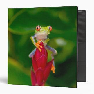 Red-eye tree frog, Costa Rica Binder
