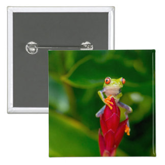 Red-eye tree frog, Costa Rica 2 Inch Square Button