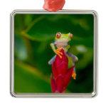 Red-eye tree frog, Costa Rica Metal Ornament