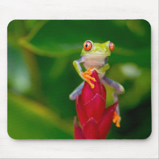 Red-eye tree frog, Costa Rica Mouse Pad