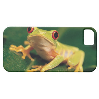 Red eye tree frog iPhone SE/5/5s case