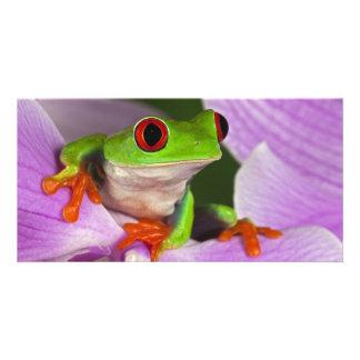 Red Eye Tree Frog Photo Card