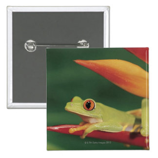Red eye tree frog sitting on flower 2 inch square button