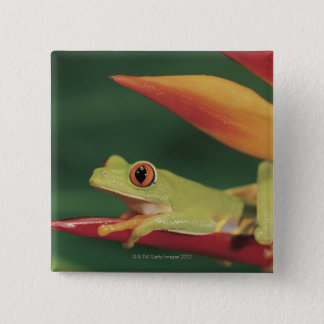 Red eye tree frog sitting on flower button