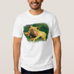 Red eye tree frog t-shirts