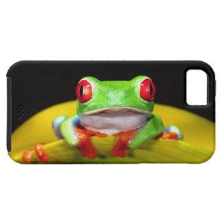 Red Eye Treefrog, Agalychinis callidryas, Native iPhone SE/5/5s Case