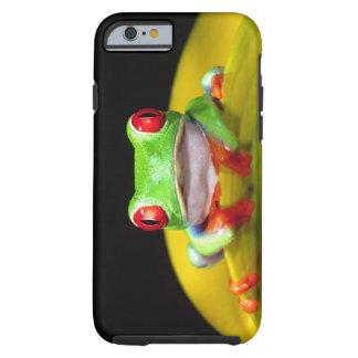 Red Eye Treefrog, Agalychinis callidryas, Native Tough iPhone 6 Case