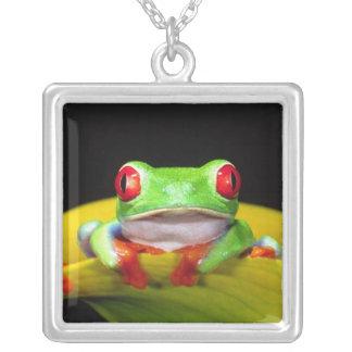 Red Eye Treefrog, callidryas de Agalychinis, Colgante Cuadrado