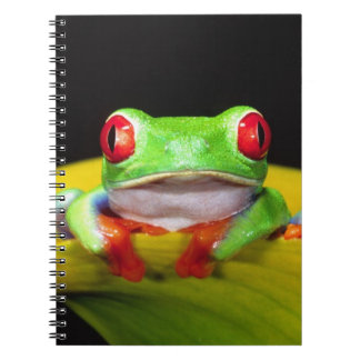Red Eye Treefrog, callidryas de Agalychinis, nativ Notebook